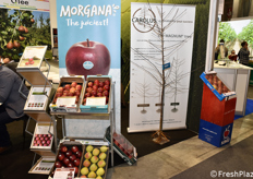 La mela Morgana, presentata anche in occasione di Fruit Attraction 2018.