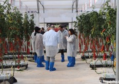 GDO in visita alla Demoo Greenhouse Tomato 2020